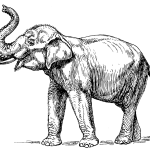 Indian elephant PSF.png  Wikimedia Commons