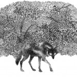 black & white pen illustration of a wolk in front of a thick forest