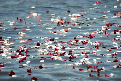 Petals floating in water