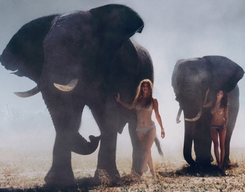models walk with elephants