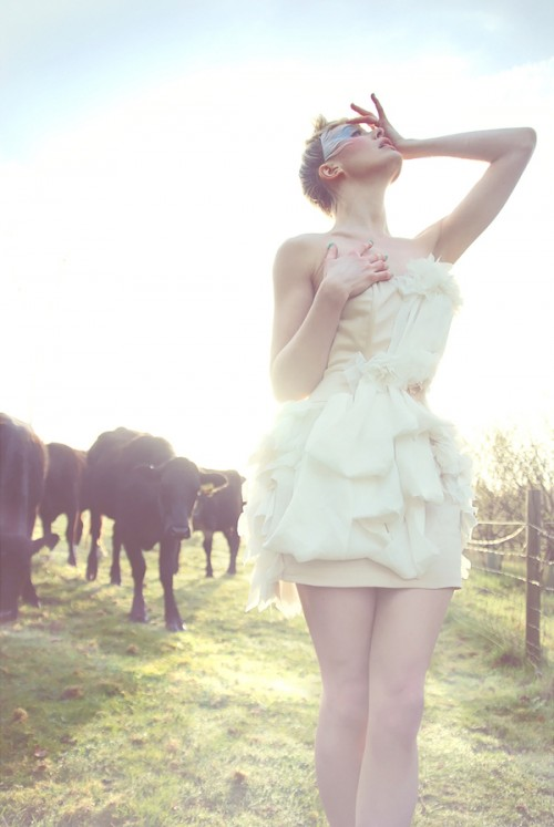 Katy Cee and a herd of cows