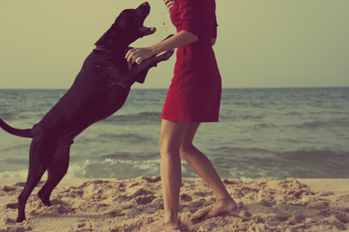 Black dog and girl in red dress on the beach