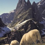 Dolomiten 1974 by Dr. Hannes Grobe