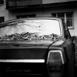 Windscreen leaves by Aleksey Chizhik
