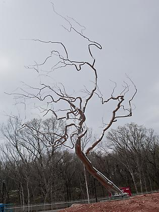 Stainless steel tree sculpture
