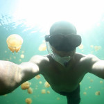 JELLYFISH LAKE, PALAU on Vimeo