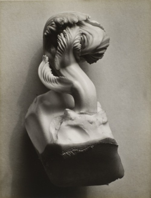 Cabgage (Chard) by Edward Weston - 1931