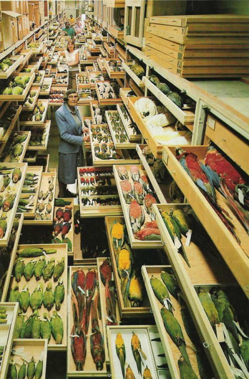 photograph of the bird specimen archive of the Smithsonian