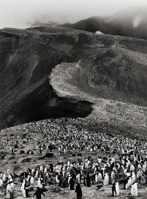 photograph of penguins on a ridge