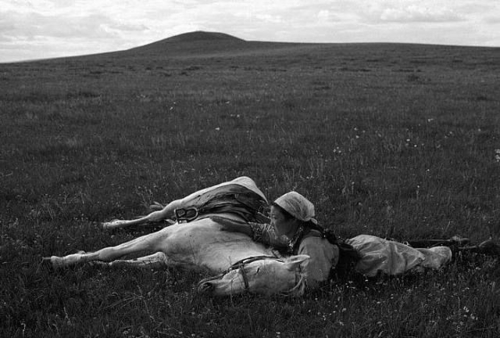 black & white photograph of a young woman stroking a sleeping horse