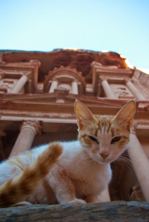Close-up photo of a cat with the edifice of Petra looming behind it.