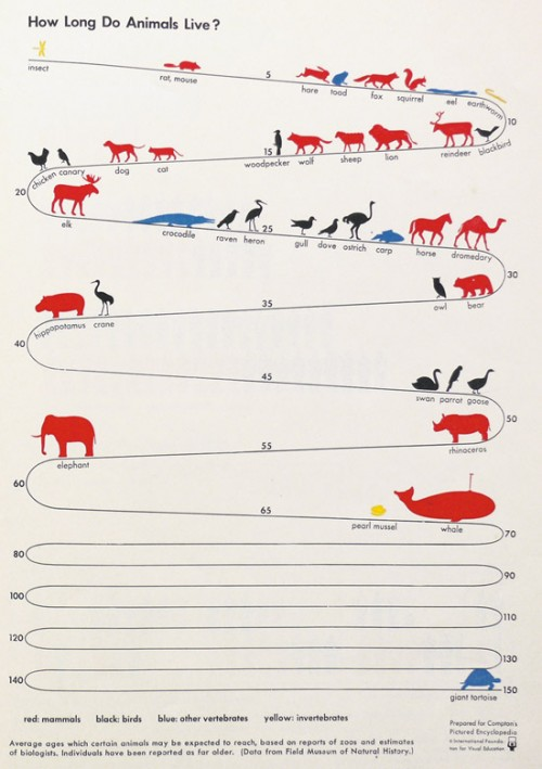 infographic showing how long animals live