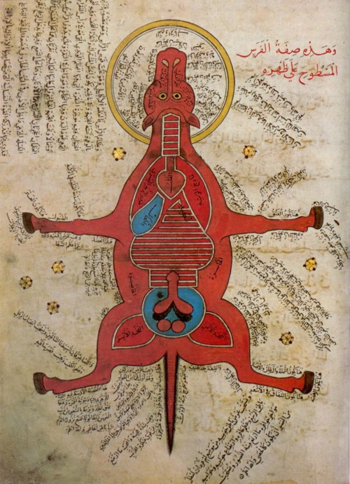 Anatomy of a horse from 15th century Egypt