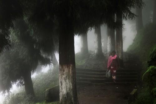 Darjeeling by Christophe Jacrot